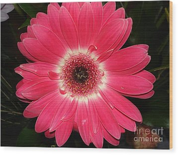 Wood Print featuring the photograph Pink Gerbera Daisy by Kerri Mortenson