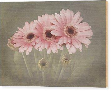 Pink Gerbera Daisys Wood Print by Fiona Messenger