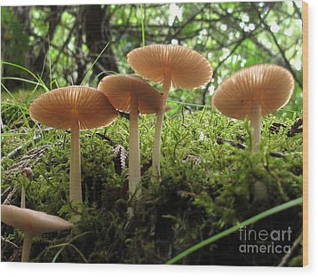Pink Gills Wood Print by Timothy Myles