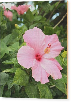 Wood Print featuring the photograph Pink Hibiscus by Craig Wood