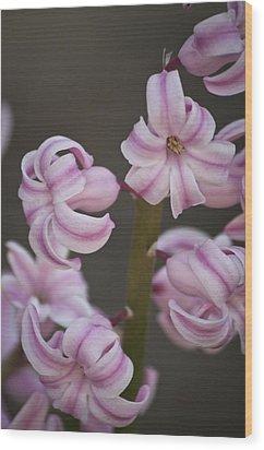 Pink Hyacinth 2 Wood Print by Teresa Mucha