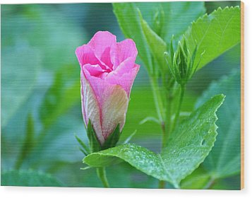 Pink Hybiscus Bud Wood Print