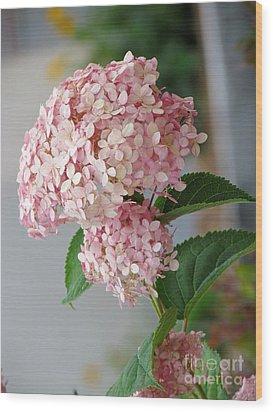 Pink Hydrangea Wood Print by France Laliberte
