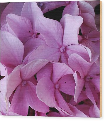 Pink Hydrangea Up Close Wood Print by Bruce Bley