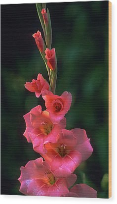 Pink Iris On Green Wood Print