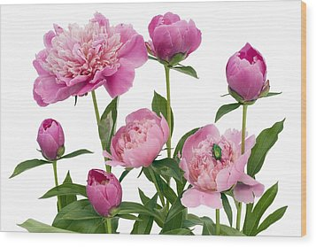 Wood Print featuring the photograph Pink June Peonies And A Green Bug by Aleksandr Volkov