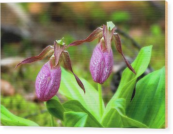 Pink Lady Slippers Wood Print by Tony Gayhart