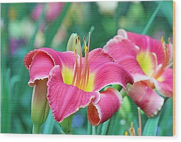 Pink Lilies Wood Print by Becky Lodes