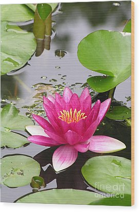 Pink Lily Flower  Wood Print by Diane Greco-Lesser