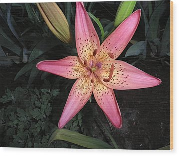 Pink Lily Wood Print by Kate Gallagher