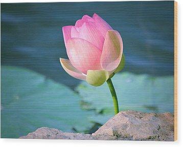 Pink Lotus 2 Wood Print by Julie Palencia