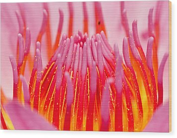 Pink Lotus In Thailand Wood Print by Chatchawin Jampapha