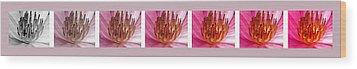 Pink Lotus Wood Print by Sumit Mehndiratta