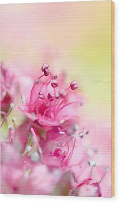 Pink Magic Wood Print by Sharon Johnstone