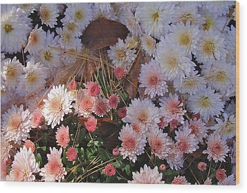 Wood Print featuring the photograph Pink Mum by Joseph Yarbrough