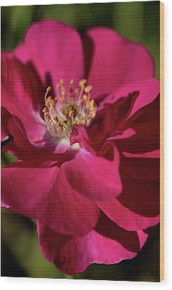 Wood Print featuring the photograph Pink Of Rose by Joy Watson