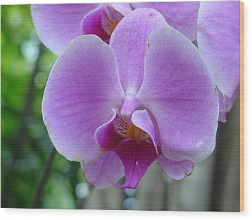 Wood Print featuring the photograph Pink Orchid by Charles and Melisa Morrison