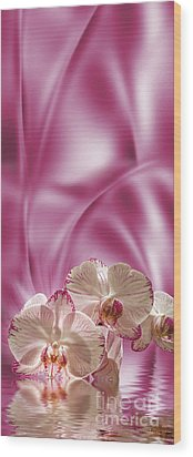 Pink Orchid Wood Print by Johnny Hildingsson