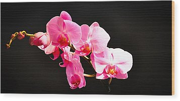 Wood Print featuring the photograph Pink Orchids At A Party by Ronda Broatch