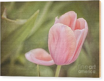 Wood Print featuring the photograph Pink Passion by Cheryl Davis