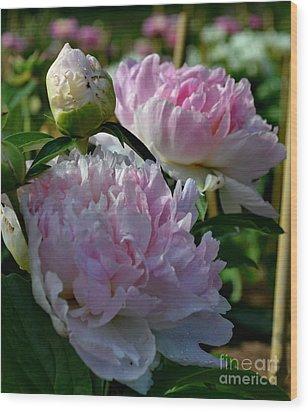 Pink Peonies-40 Wood Print by Eva Thomas