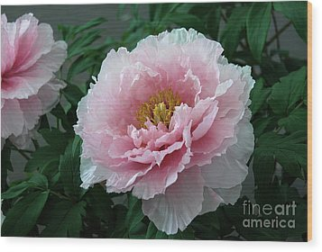 Pink Peony Flowers Series 2 Wood Print by Eva Kaufman