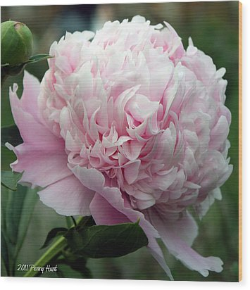 Wood Print featuring the photograph Pink Peony Perfection by Penny Hunt
