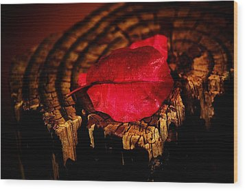 Wood Print featuring the photograph Pink Petal by Jessica Shelton