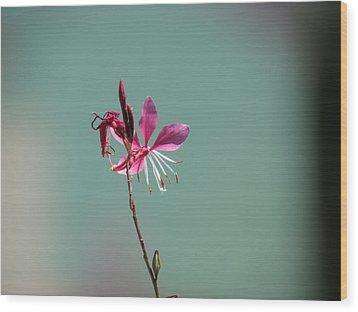 Pink Petals Wood Print by Bonnie Muir
