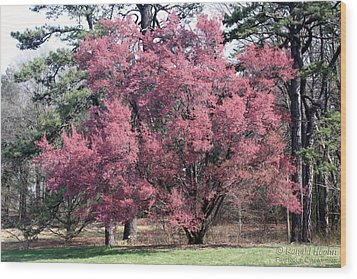 Pink Power Wood Print