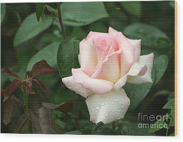 Wood Print featuring the photograph Pink Promise by Living Color Photography Lorraine Lynch
