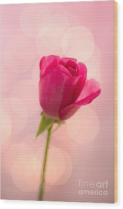 Pink Rose Bud Bokeh Wood Print