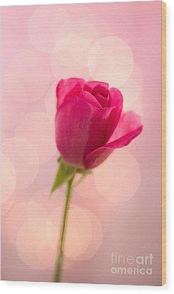 Pink Rose Bud Bokeh Wood Print by Ethiriel  Photography