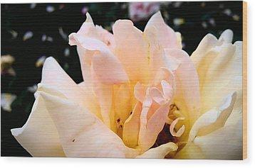 Pink Rose Wood Print by (c) Serge Jespers