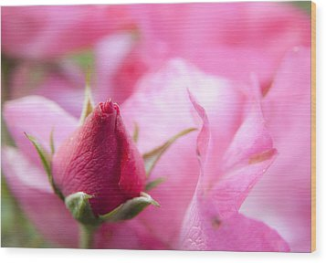 Wood Print featuring the photograph Pink Rose by Jeannette Hunt