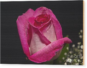 Wood Print featuring the photograph Pink Rose by Michael Waters
