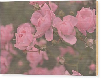 Pink Roses Wood Print by Paula Sharlea
