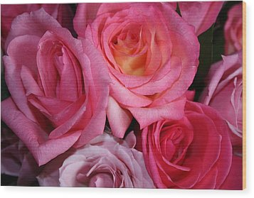 Pink Roses Wood Print by Robin Regan