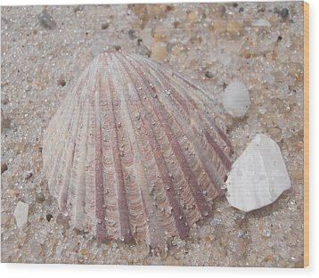 Pink Scallop Shell Wood Print by Kimberly Perry