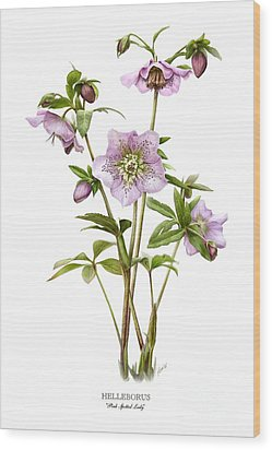 Pink Spotted Lady Hellebores Wood Print