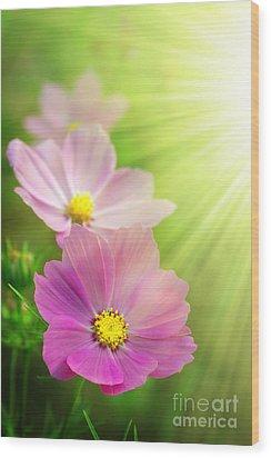 Pink Spring Wood Print by Carlos Caetano