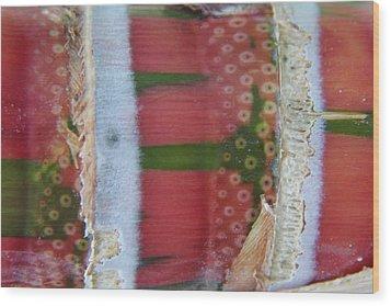 Pink Sugarcane 3 Wood Print