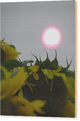 Pink Sun Setting Over Sunflower Field Wood Print
