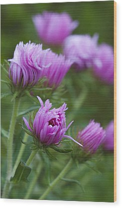 Wood Print featuring the photograph Pink Swirls by Carrie Cranwill