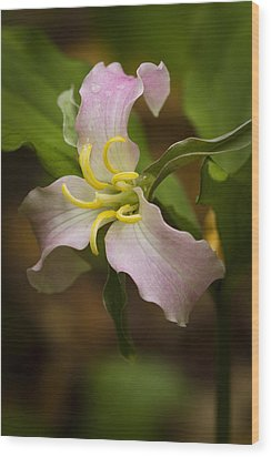Pink Trillium Wood Print by Carrie Cranwill