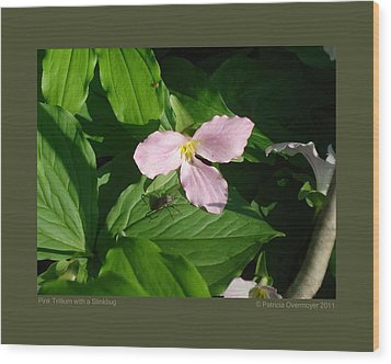 Wood Print featuring the photograph Pink Trillium Witha Stinkbug by Patricia Overmoyer