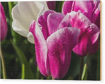 Wood Print featuring the photograph Pink Tulip by David Gleeson