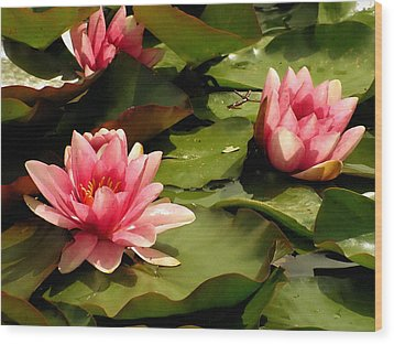 Pink Water Lilies Wood Print by Design Windmill