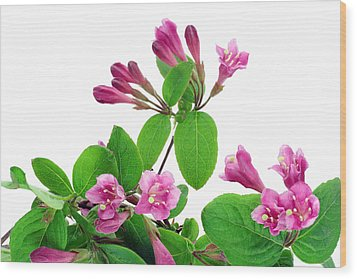 Wood Print featuring the photograph Pink Weigela Background by Aleksandr Volkov