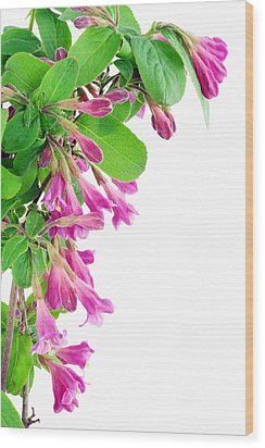Wood Print featuring the photograph Pink Weigela Postcard by Aleksandr Volkov